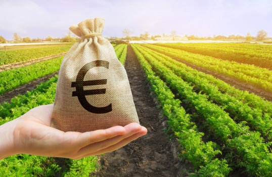 Money,Bag,On,The,Background,Of,Agricultural,Crops,In,The
